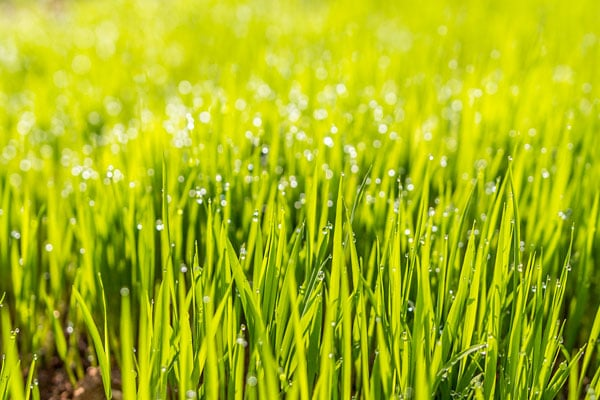 Tonte de pelouses Rouen Evreux