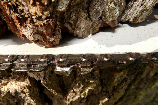 Abattage arbre en Normandie